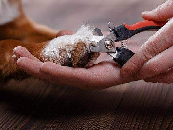 Dog getting it's nails trimmed
