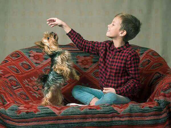 Child in a plaid shirt playing with a dog