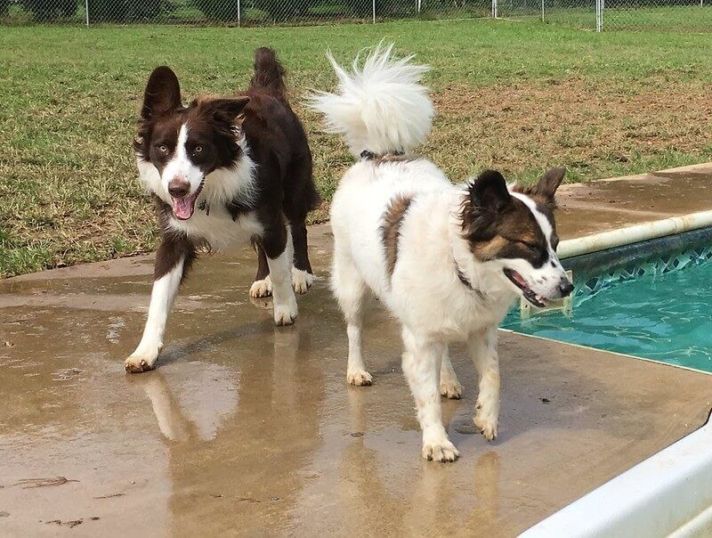 Dogs Playing at Greenlin West Pet Resort