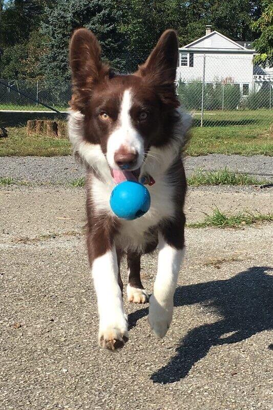 Dog Playing at Greenlin West Pet Resort